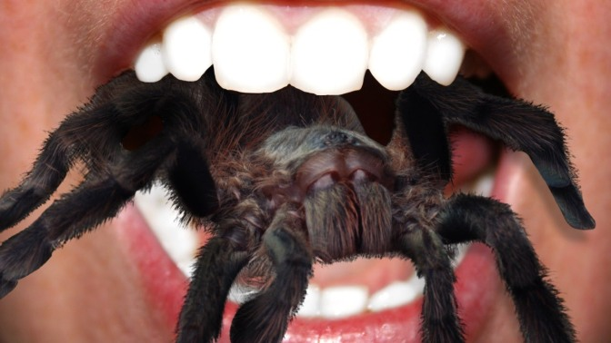 Eating Tarantulas! Spider in a Can! DON'T DO IT!